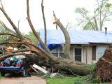 Imprelis tree damage settlement